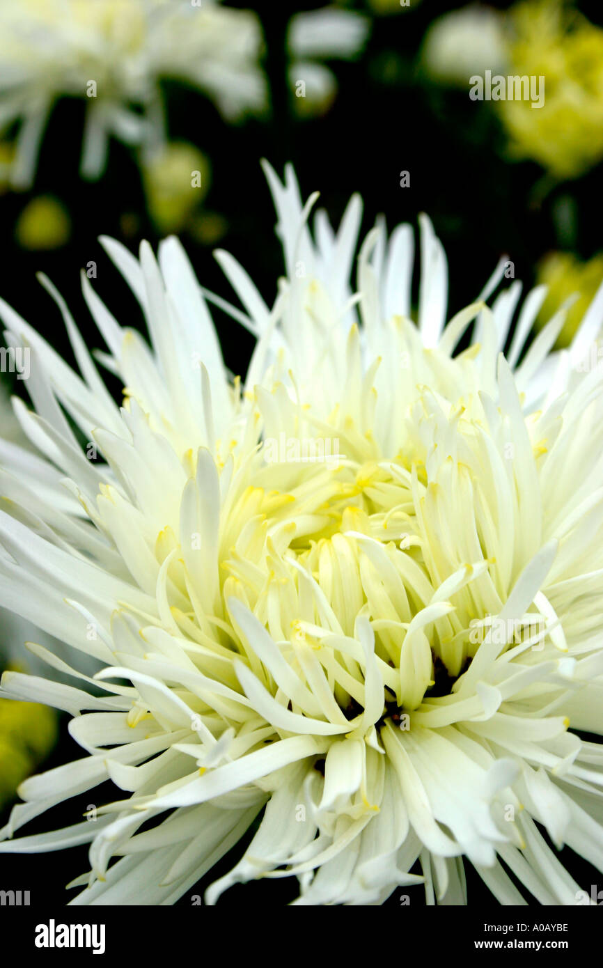 White Flowers Names And Pictures Whatus In A Name More Unusual