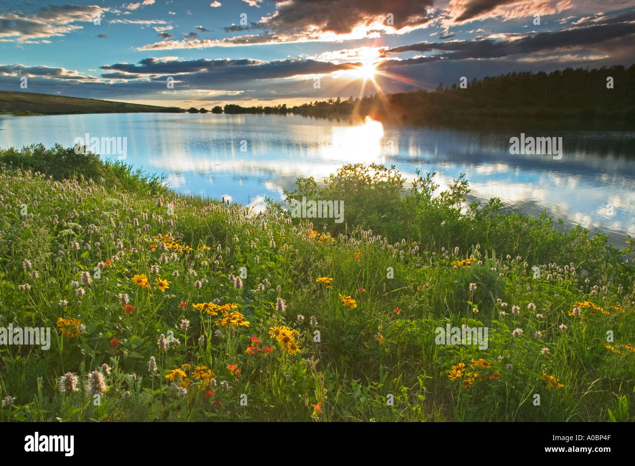 Fish lake with wildflowers and sunset steens mountain for Fish lake oregon