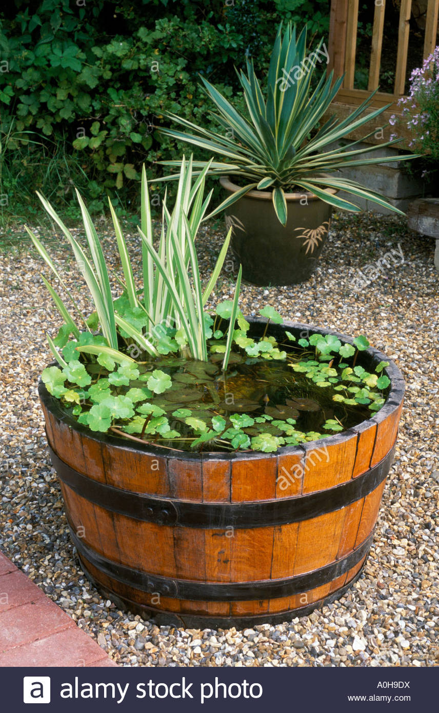 Wooden Half Barrel Pond Water Feature Stock Photo Royalty