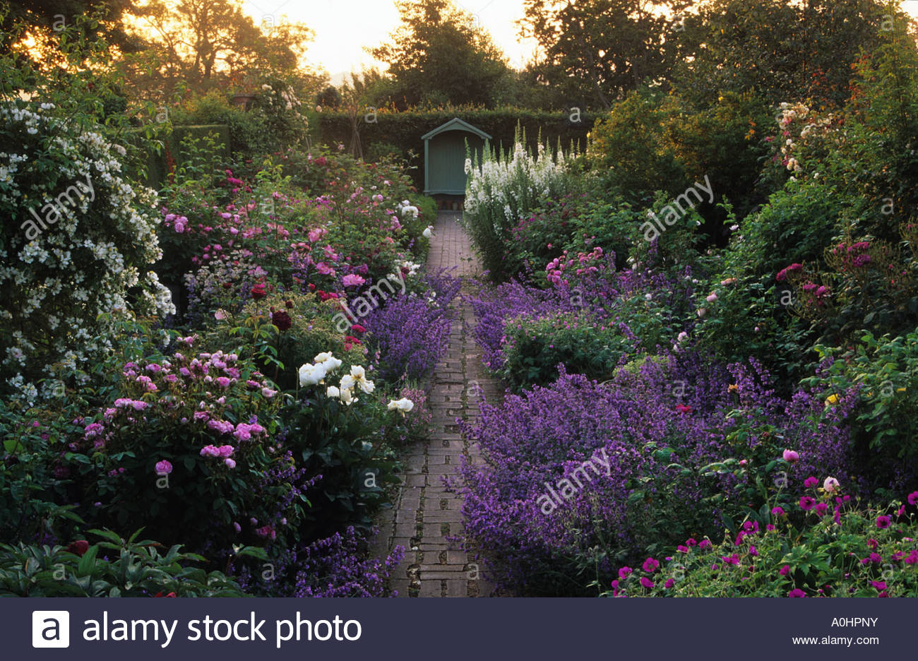High Quality Scented Garden Room At Dawn. Beech Hedge. Path Leading To Covered Seat.  Roses. Peonies. Paeonias