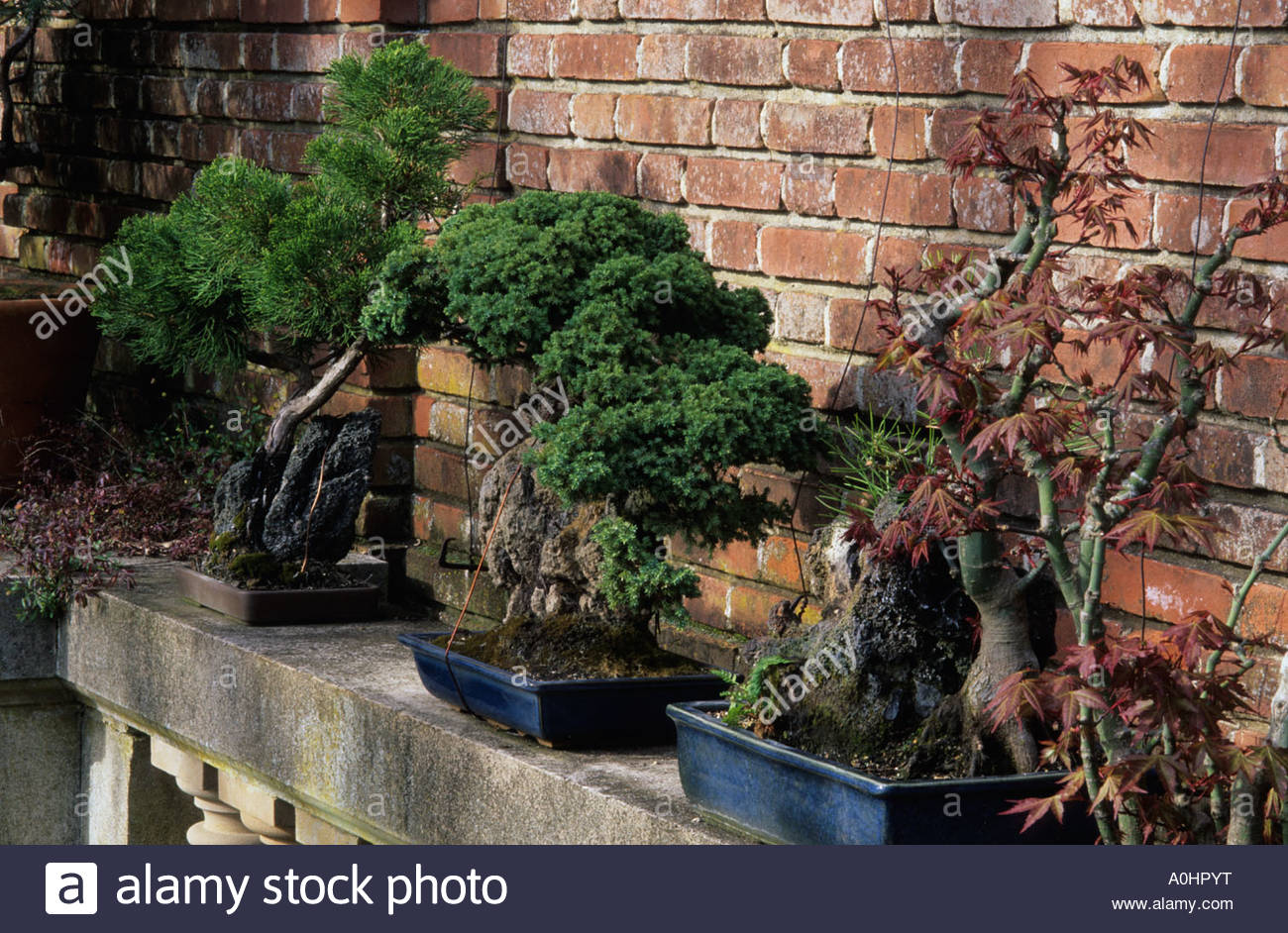 Filoli california sw terrace bonsai trees on stone shelf for Terrace trees
