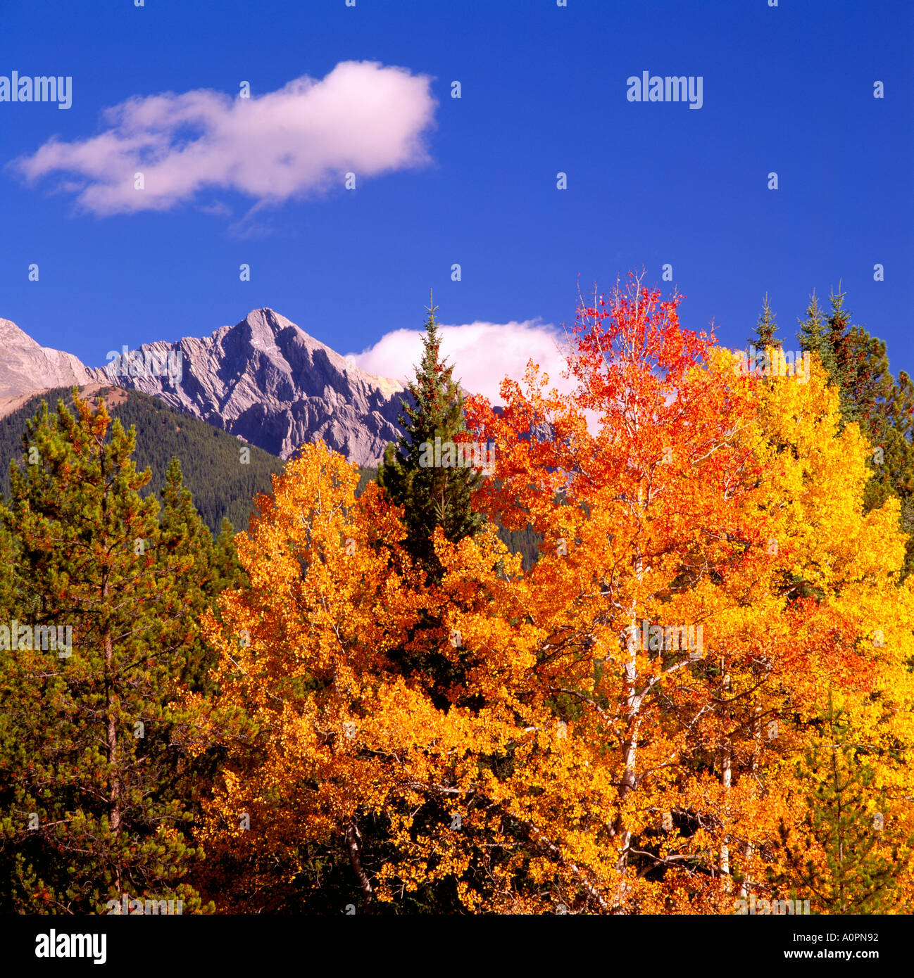Leaves on trees in autumn colors and mountain peak in kootenay leaves on trees in autumn colors and mountain peak in kootenay national park in the canadian rockies british columbia canada sciox Image collections