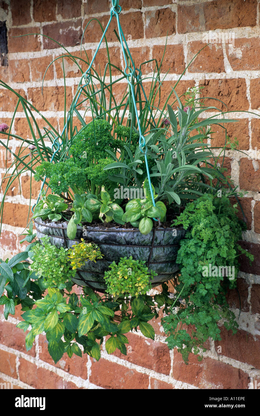 Herbs Various In Hanging Basket Stock Photo Royalty