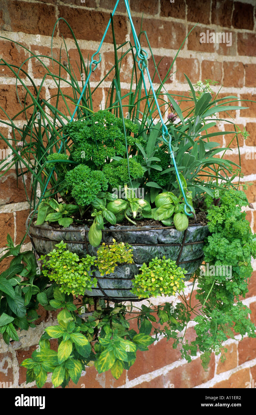 Kitchen Gardening Herbs Various In Hanging Basket Mint Brick Wall Kitchen Stock