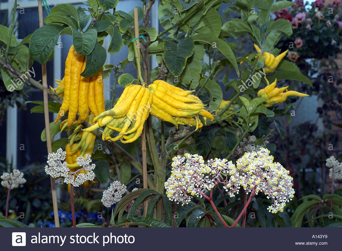 auckland domain winter garden leaves and flowers nz stock photo
