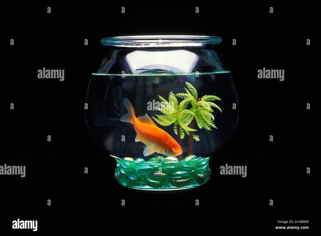 Comet goldfish in small glass fish bowl with plastic tree for Small plastic fish bowls