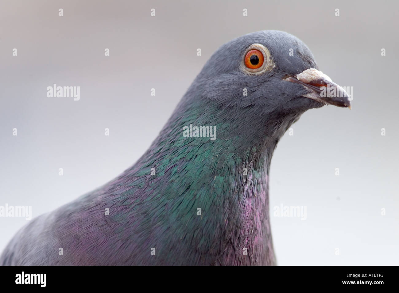 A bird may be known by its song 10