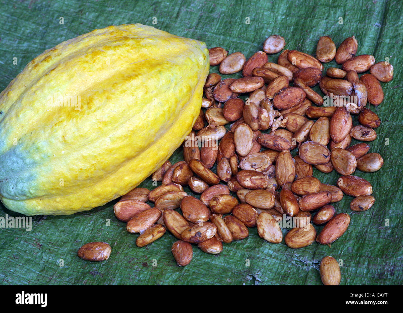 chocolate, cocoa tree (Theobroma cacao), mature fruit with seeds Stock Photo, Royalty Free Image: 10233323