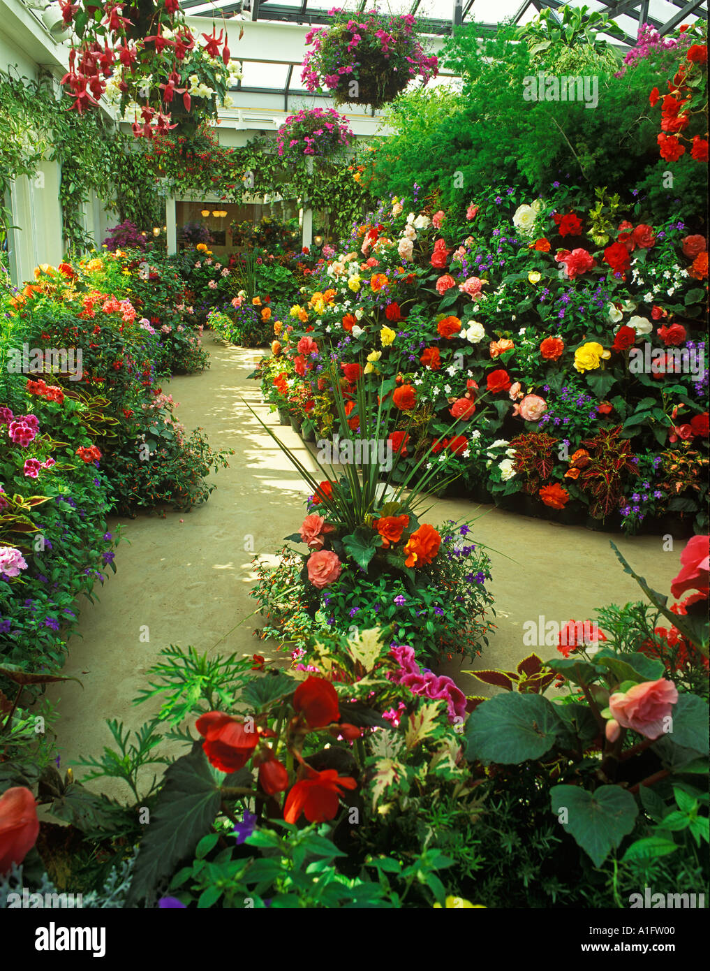Greenhouse Flowers Butchart Gardens Victoria British