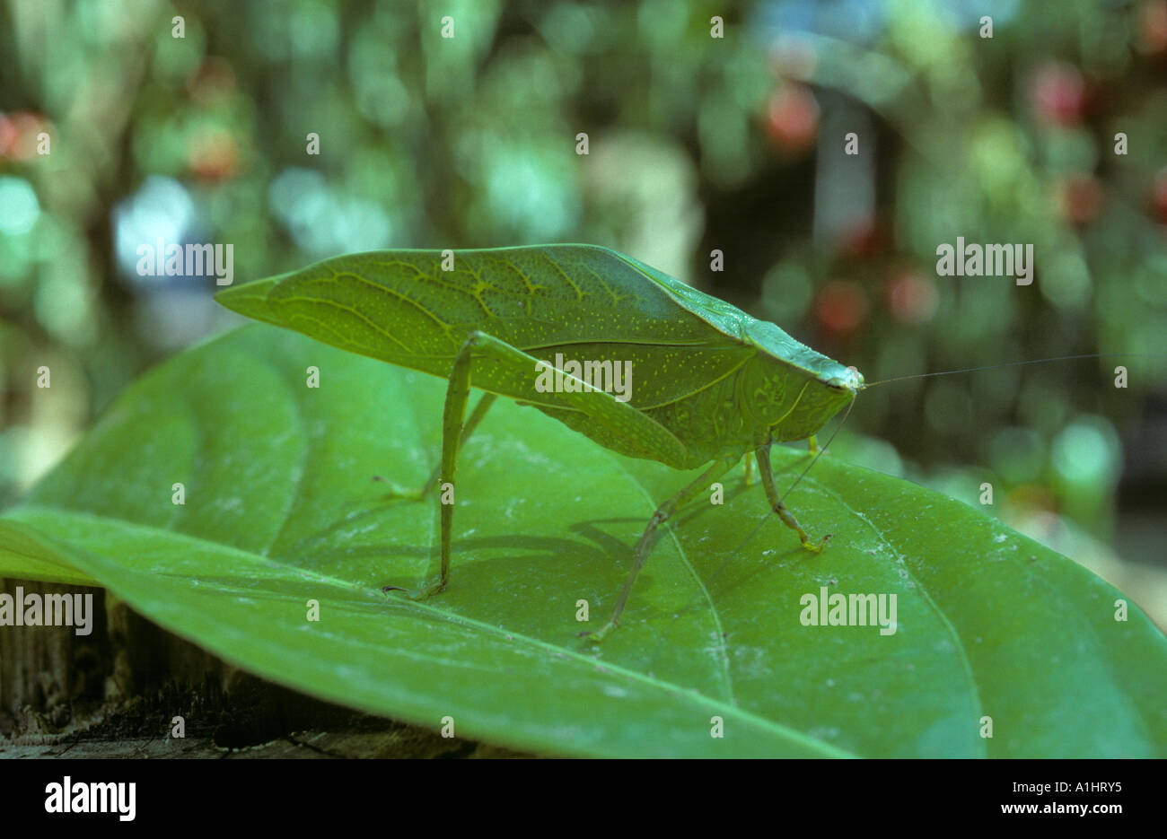 download Unsaturated Soil