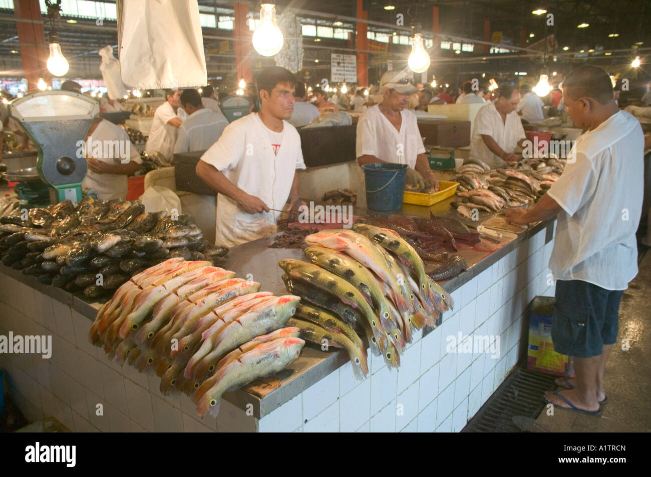 Amazon river fish in the market at manaus amazonas state for River fish market