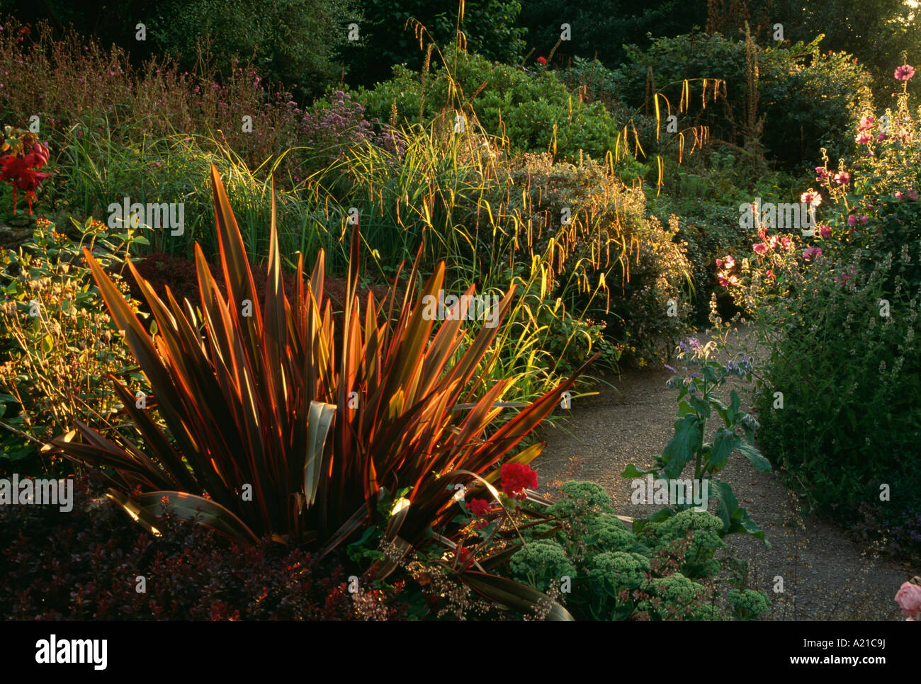Phormium and grasses in large autumn garden border stock for Large grasses for gardens