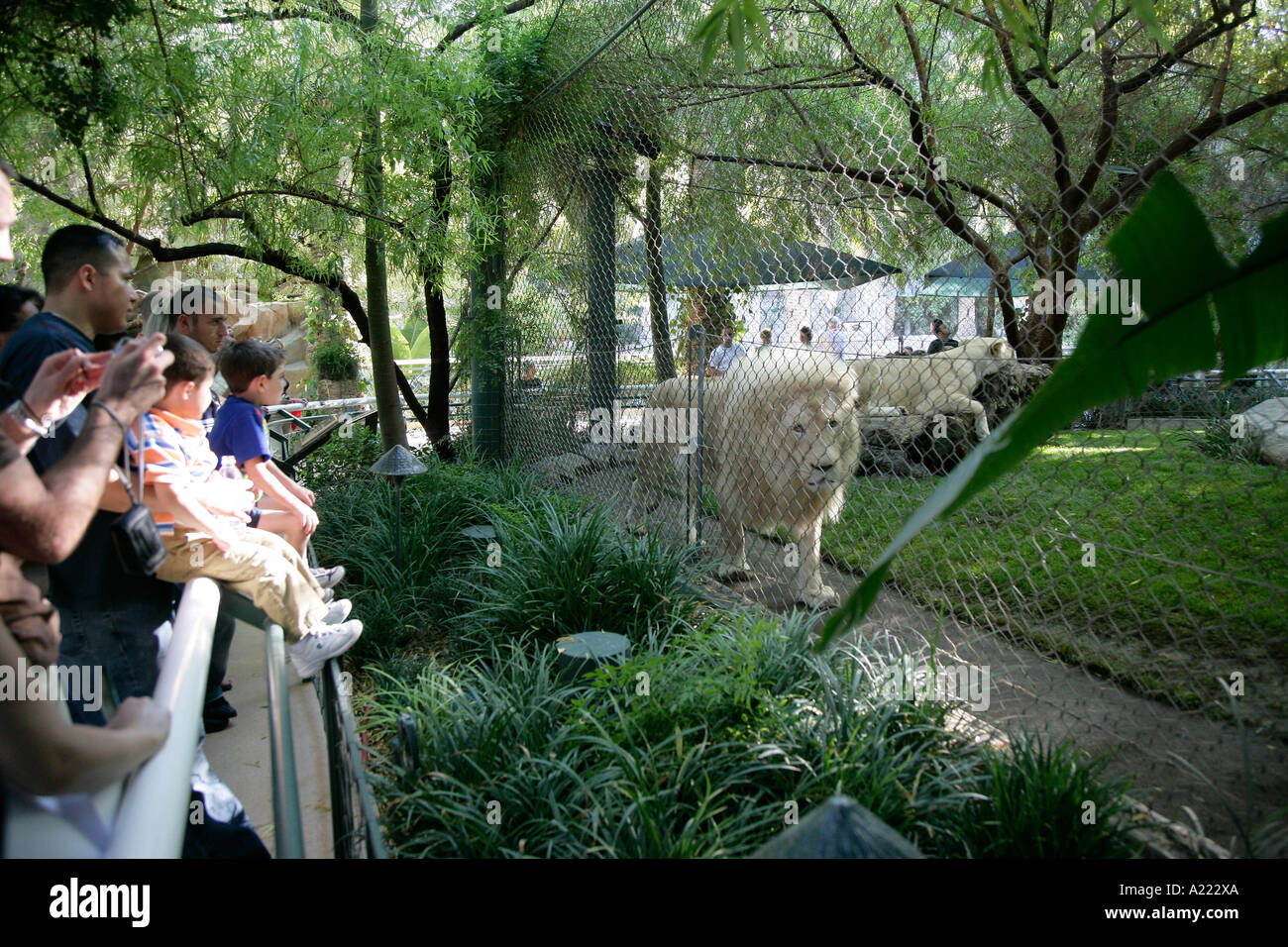 Lion Siegfried Roy S Secret Garden Dolphin Habitat Las Vegas Nevada Stock Photo Royalty Free