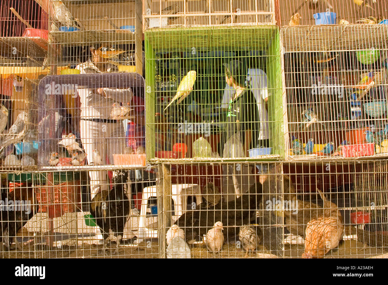 parakeets and other birds for sale at the mercado san miguel de
