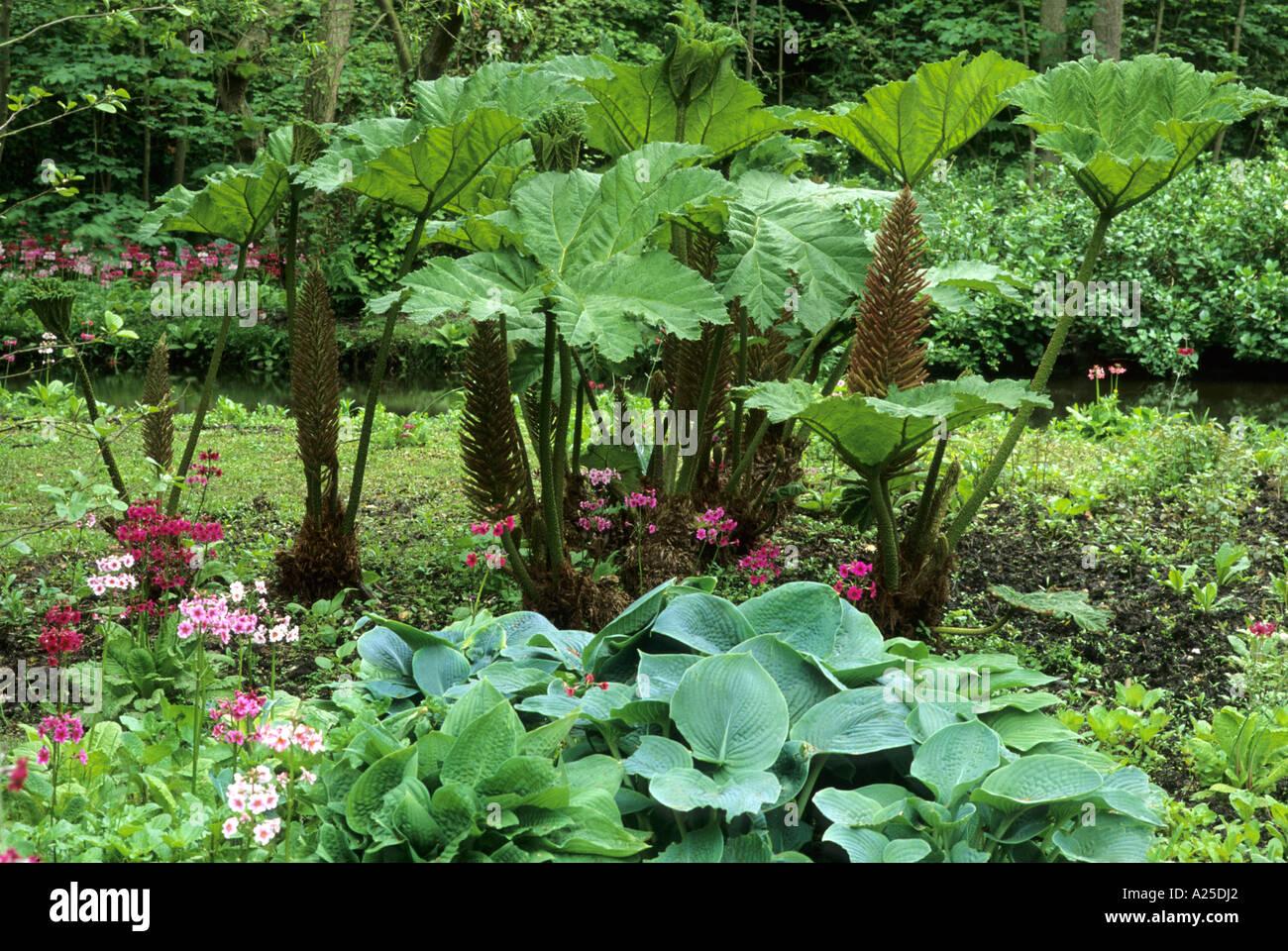 Gunnera ,Primula, Hosta, Bog Garden, Fairhaven Water Garden, Norfolk, Plants,  Flowers, Horticulture Gardens