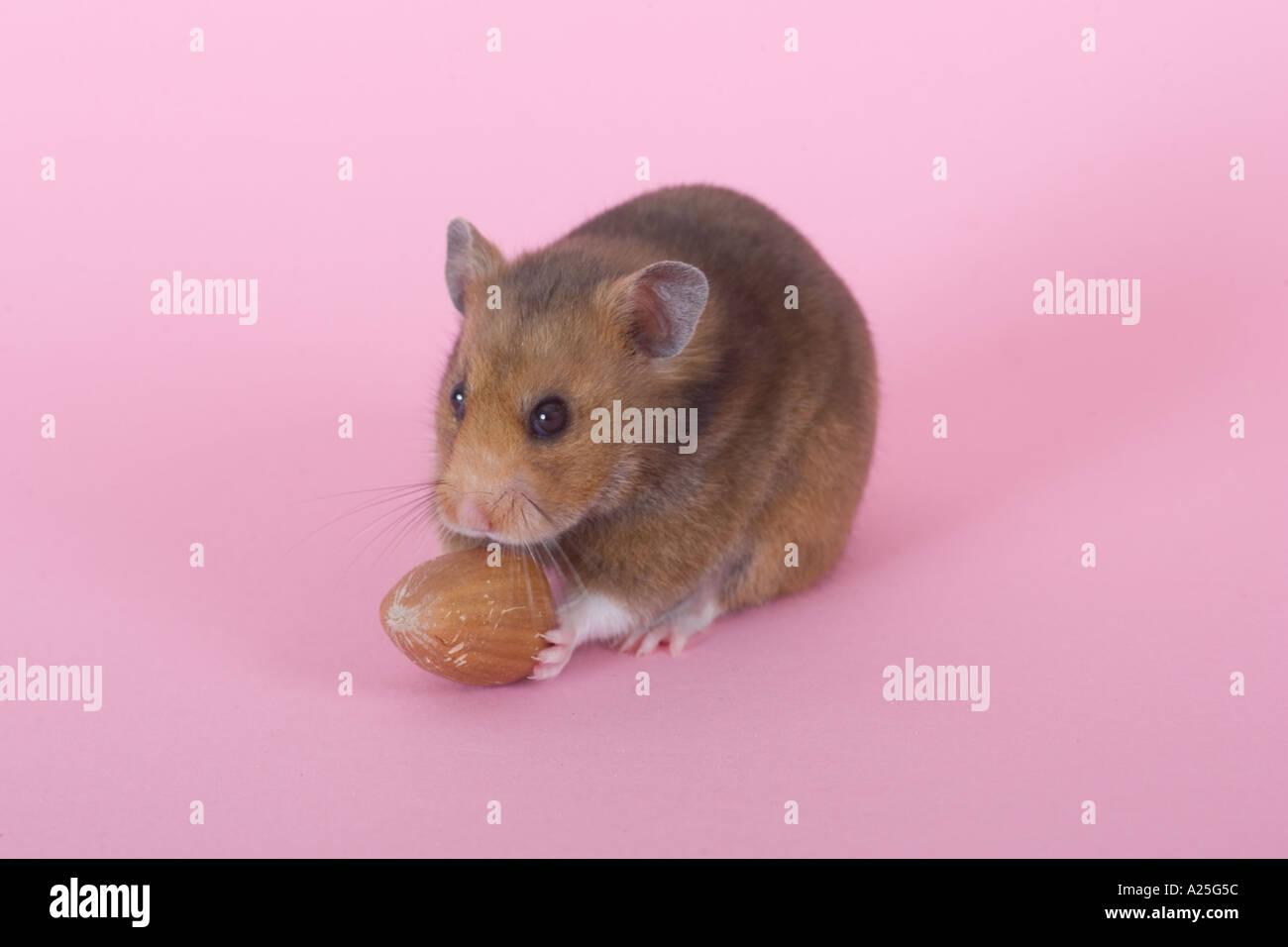 Nut Free Hamster Food