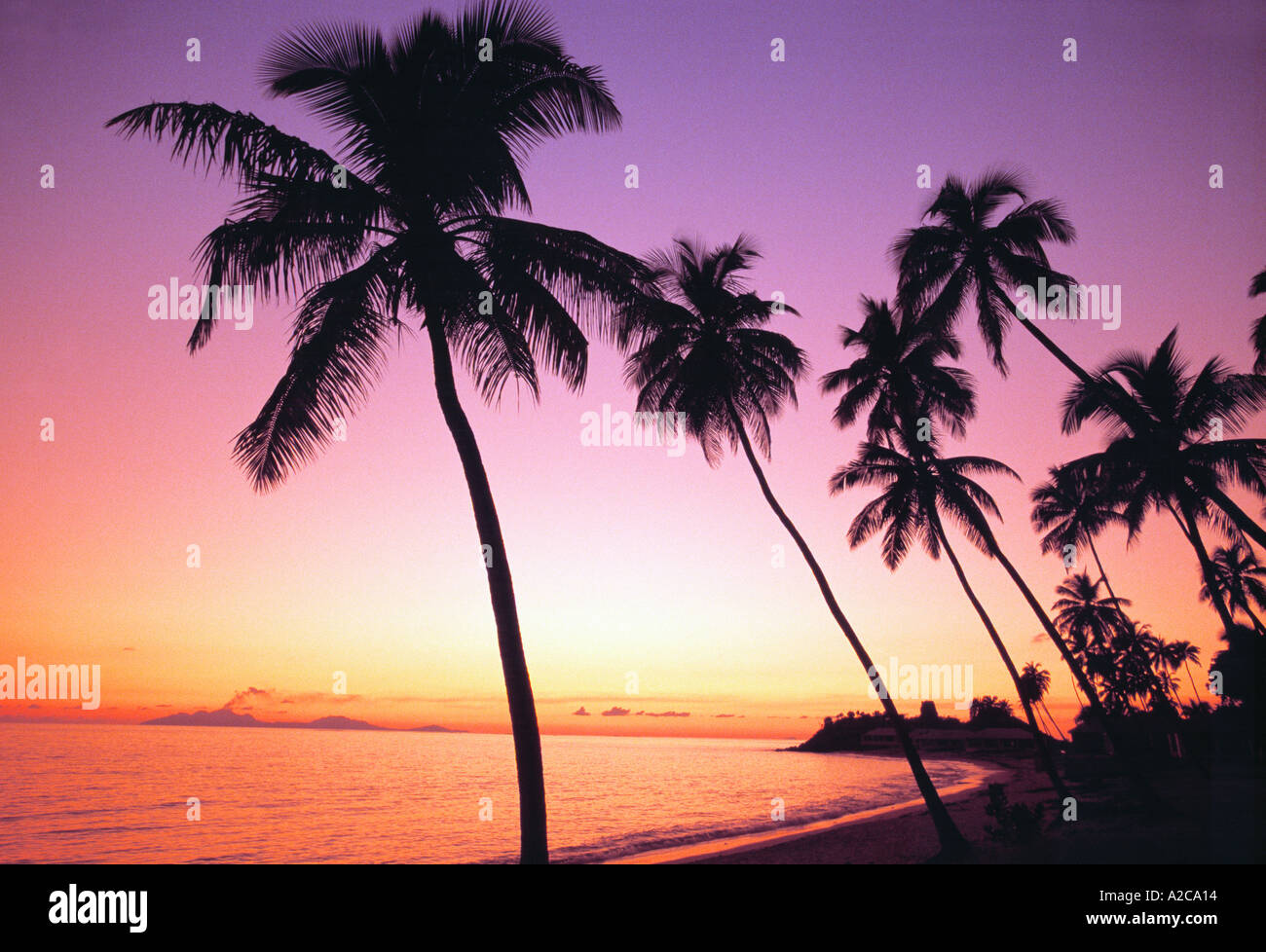 palm trees at sunset antigua west indies