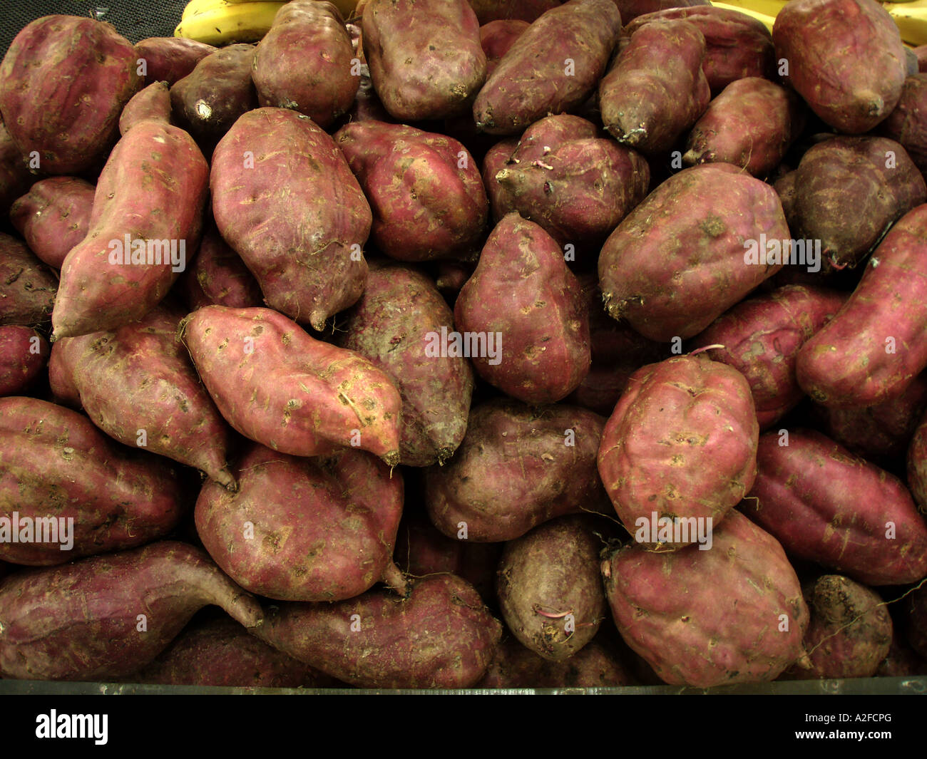Red kumara a traditional Maori food for sale in a New Zealand Stock ...