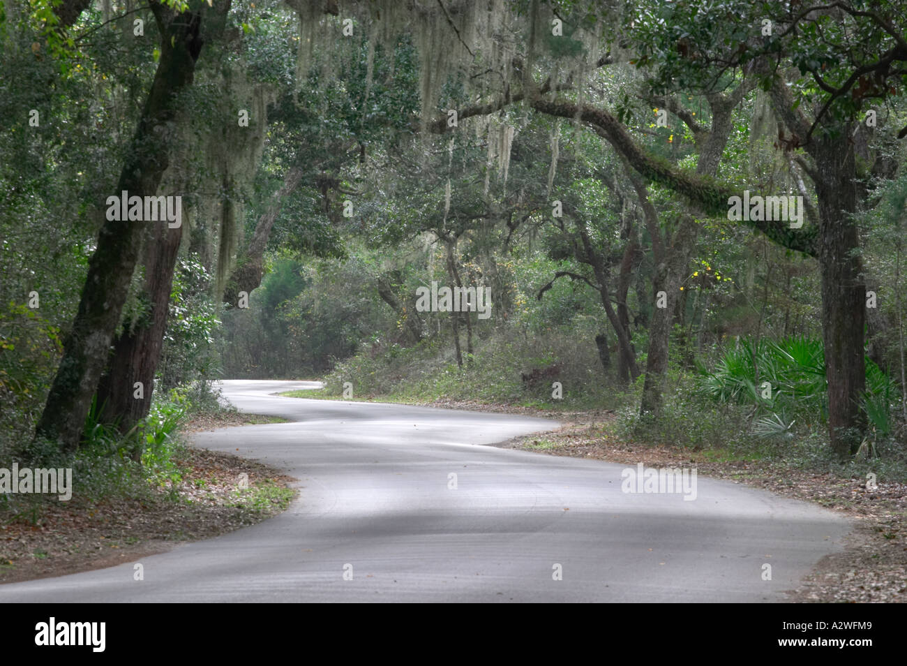 Canopy of Live Oak trees and Spanish Moss over main road at Fort Clinch State Park on Amelia Island in northeast Florida : canopy spanish - memphite.com