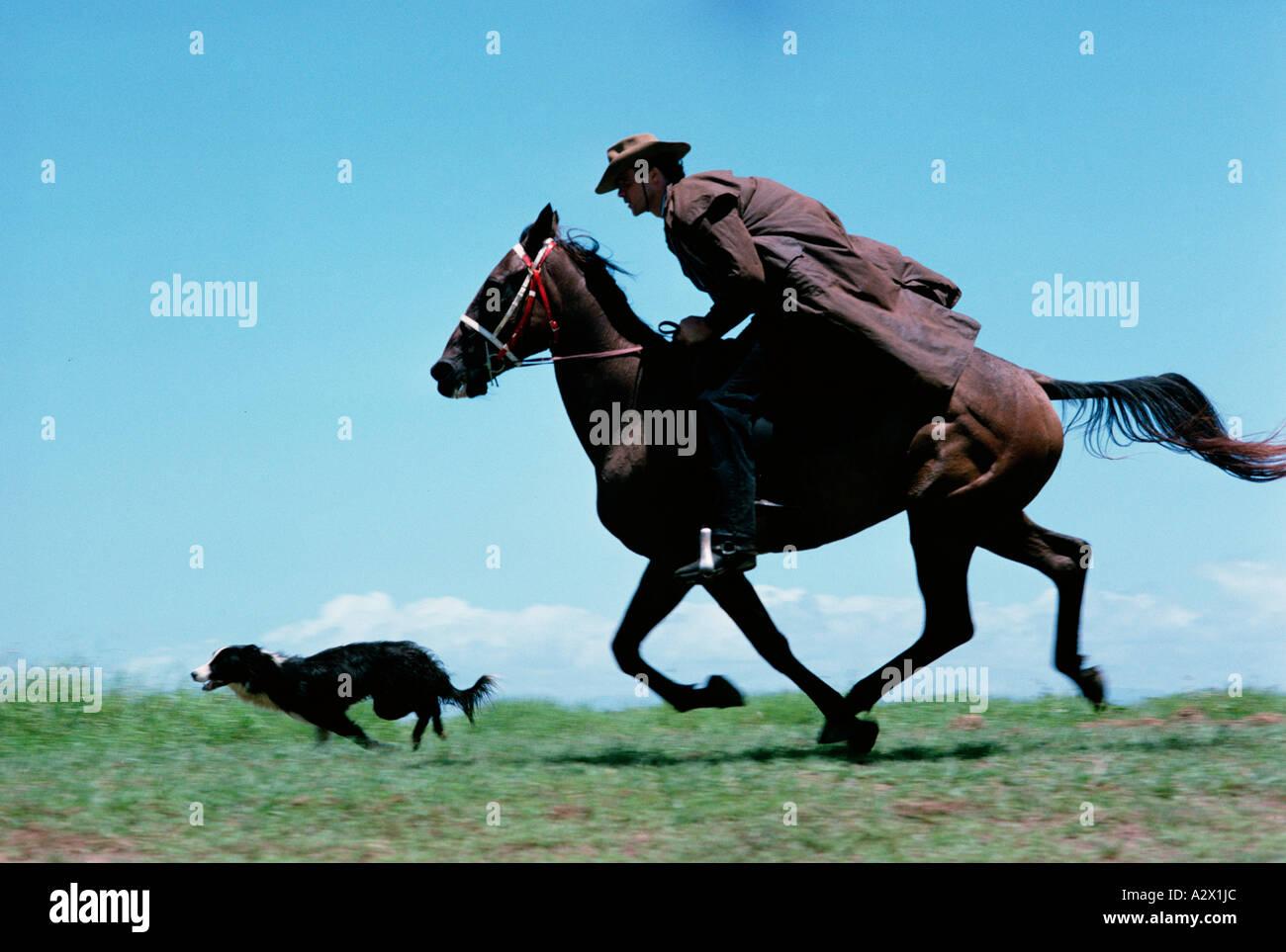 Vastu Shastra for Running Horse Painting  DecorChamp