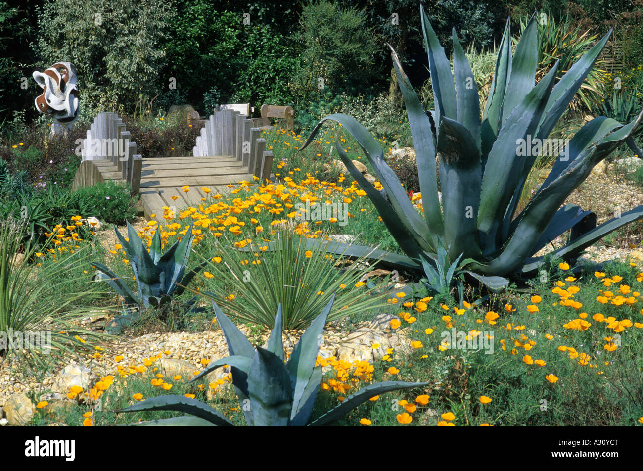 East Ruston Old Vicarage Garden Norfolk Bridge Desert Garden Cactus  Californian Poppies Popy   Stock Image