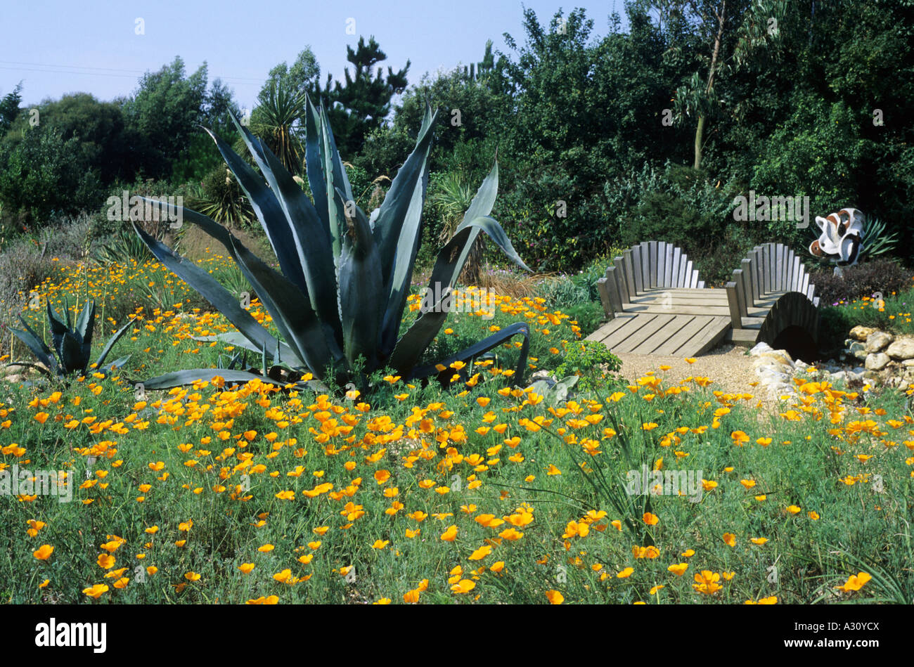 East Ruston Old Vicarage Garden Norfolk Bridge Desert Garden Cactus  Californian Poppies Poppy