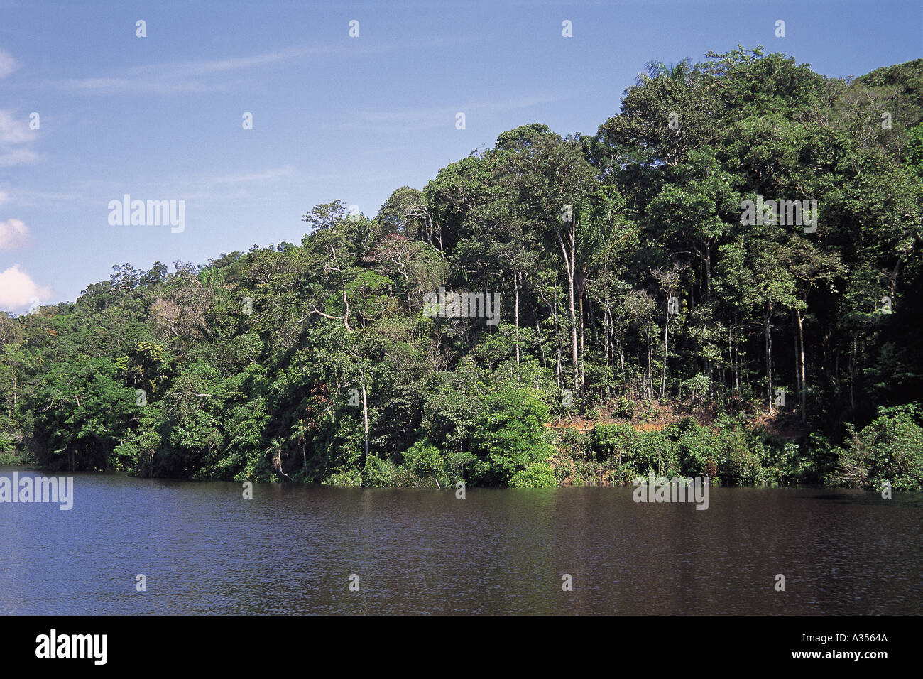 vegetation in the tropical rainforest 2018-06-12 the tropical rainforest biome is an ecosystem that covers about 7% of the earth's surface they are found all over the world but the majority of the tropical rainforest lies in south america in brazil the weather in the.