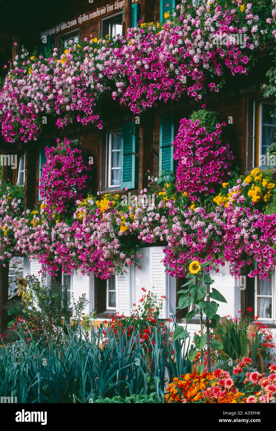 Flowers Growing In The Window Boxes Of A Traditional Swiss