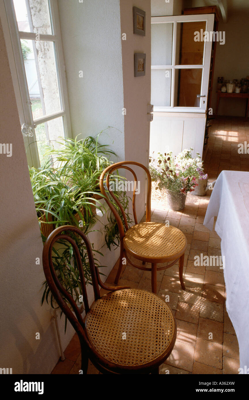 Antique thonet bentwood chair - Antique Thonet Bentwood Chairs In Front Of Windowsill With Spiderplants In White French Country Diningroom