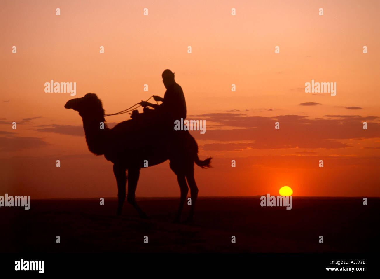 Sahara Desert Sunset Camels | www.imgkid.com - The Image ...