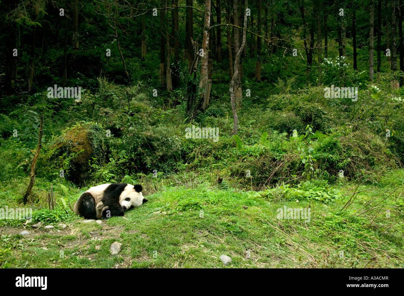 wwf panda forest - photo #5