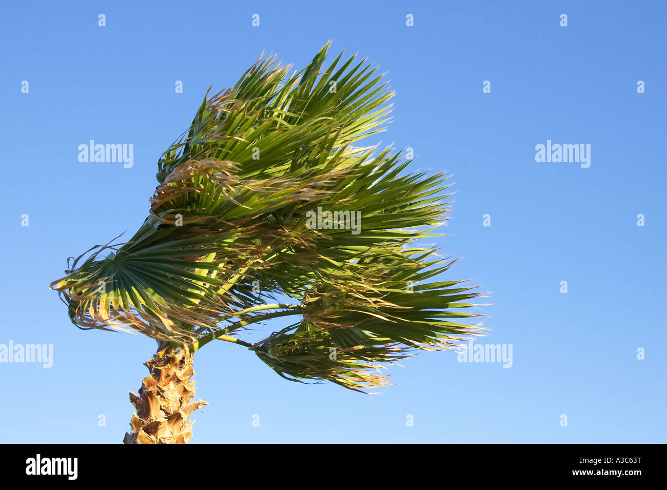 Windy Canary Islands