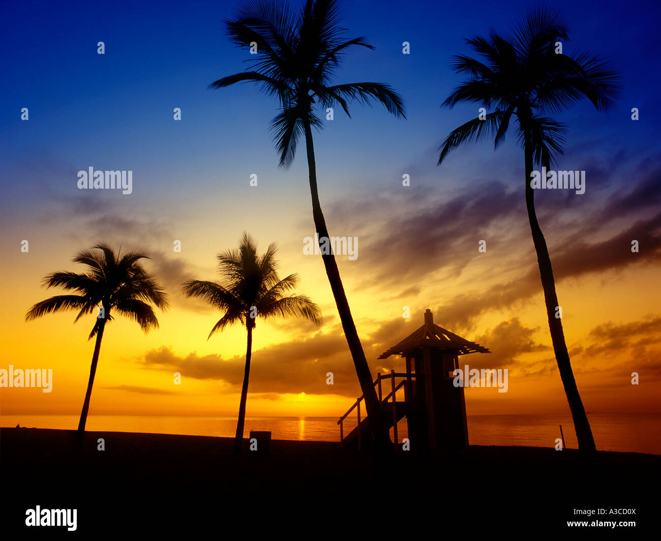 Palm Trees Beach Hut At Sunrise Sea In Background Fort Lauderdale Florida Usa