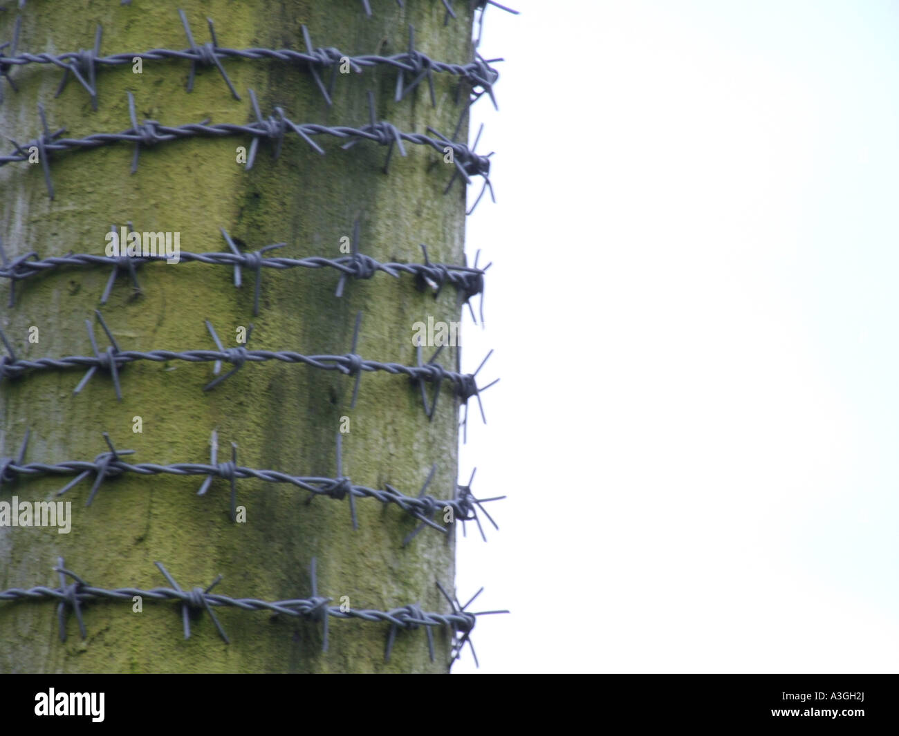 Barbed Wire Wound - Dolgular.com
