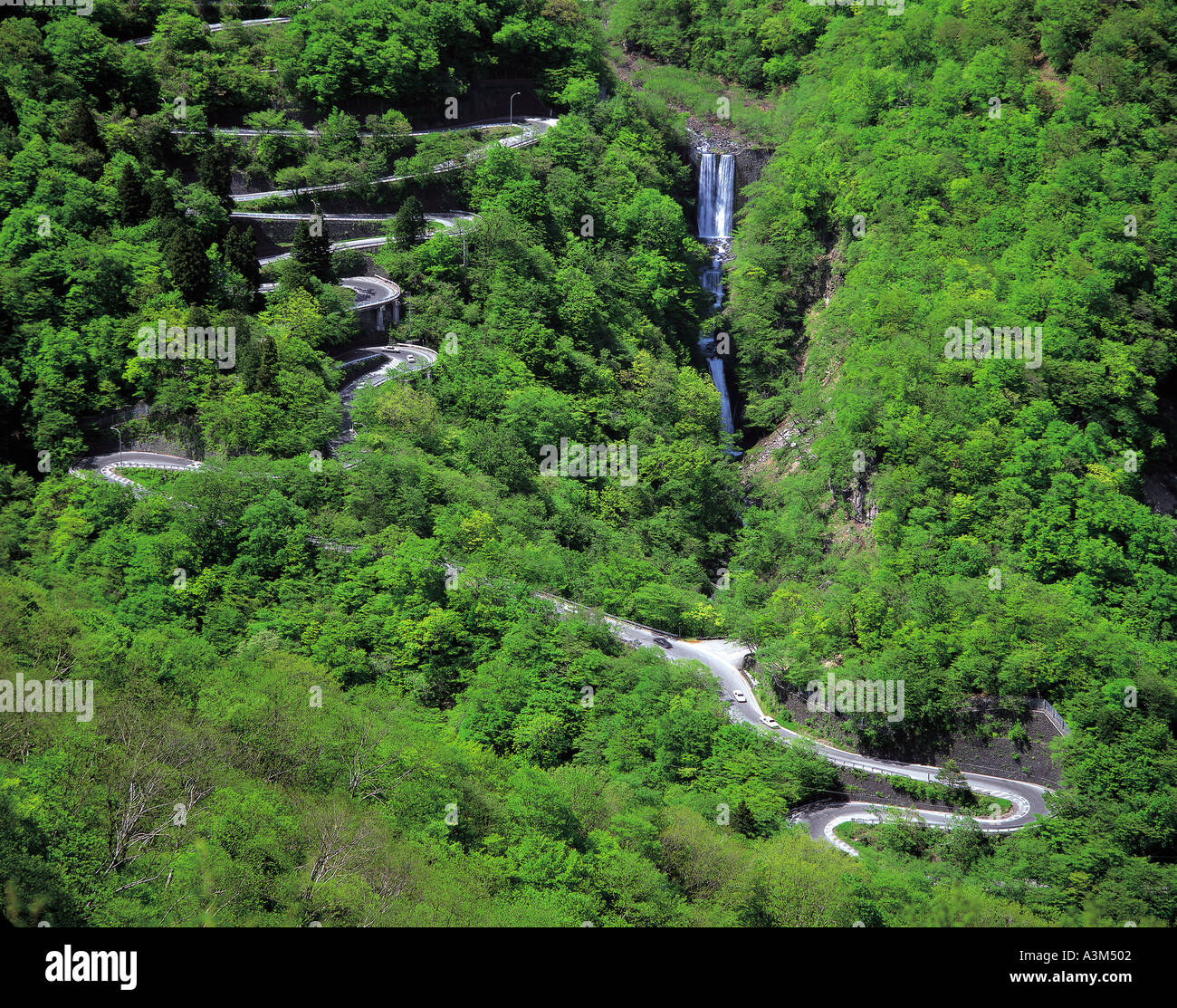 nature-road-trees-cars-water-forests-wat