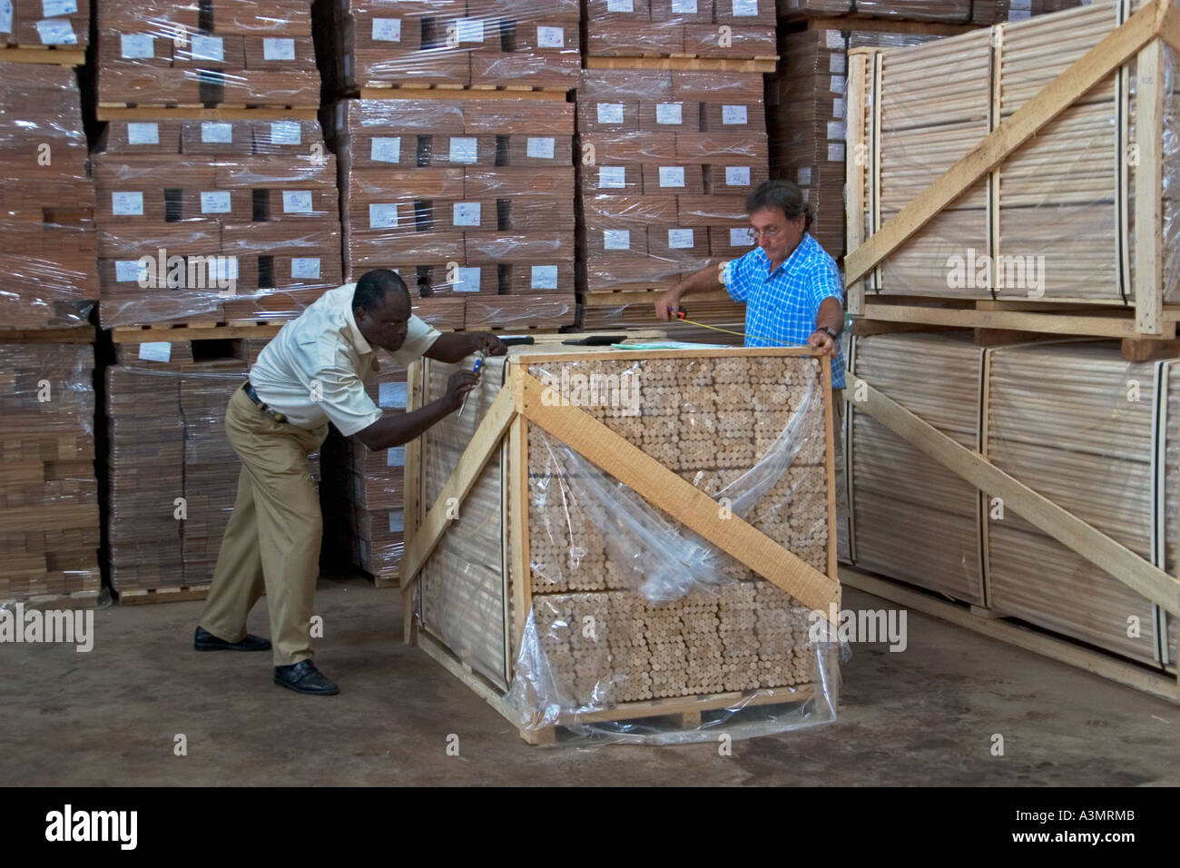 Stock Photo   The Checking And Packaging Of Sapele Wood Dowelling Used In  Furniture Mouldings Before Export To European Union, UK And USA