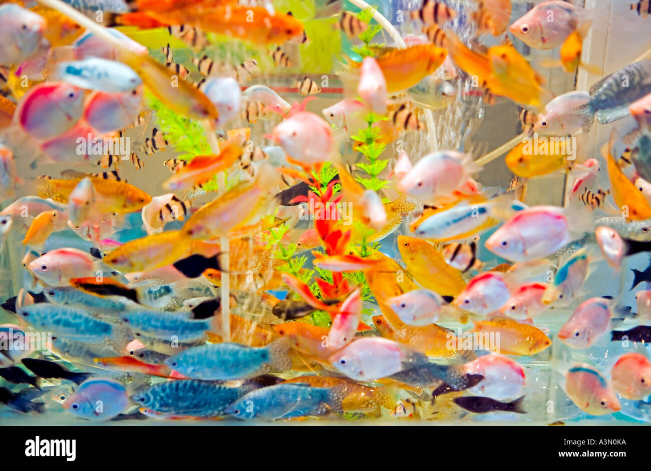 China hangzhou aquarium full of brightly colored tropical for Chinese fish market near me