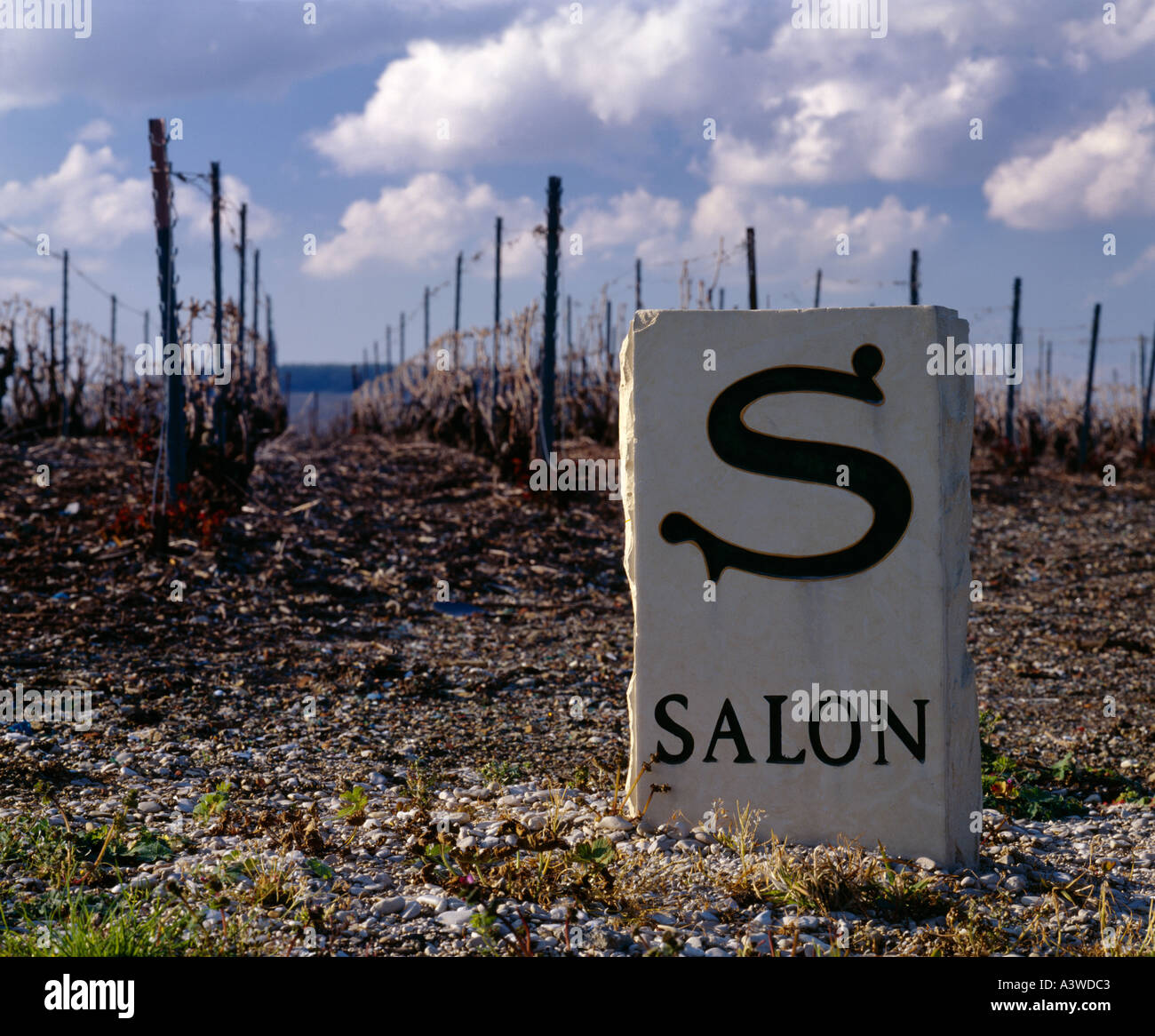 Marker stone in vineyard of champagne salon at le mesnil sur oger stock photo royalty free for Salon blanc de blancs le mesnil sur oger