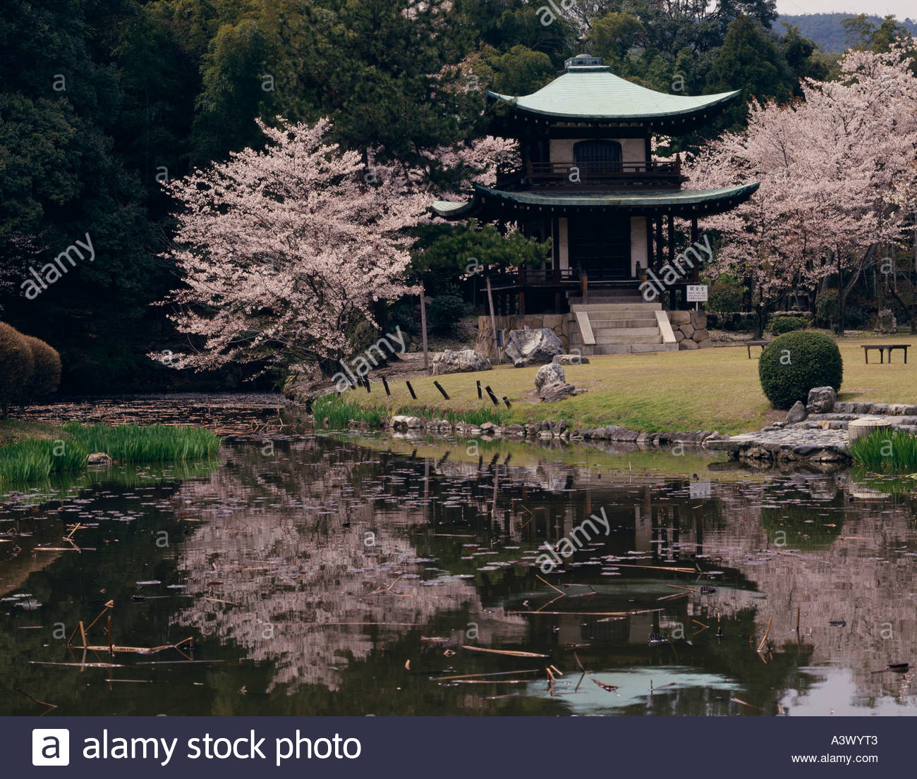 Cherry blossoms kajuji garden kyoto kyoto japan tree pond for Your pond japan