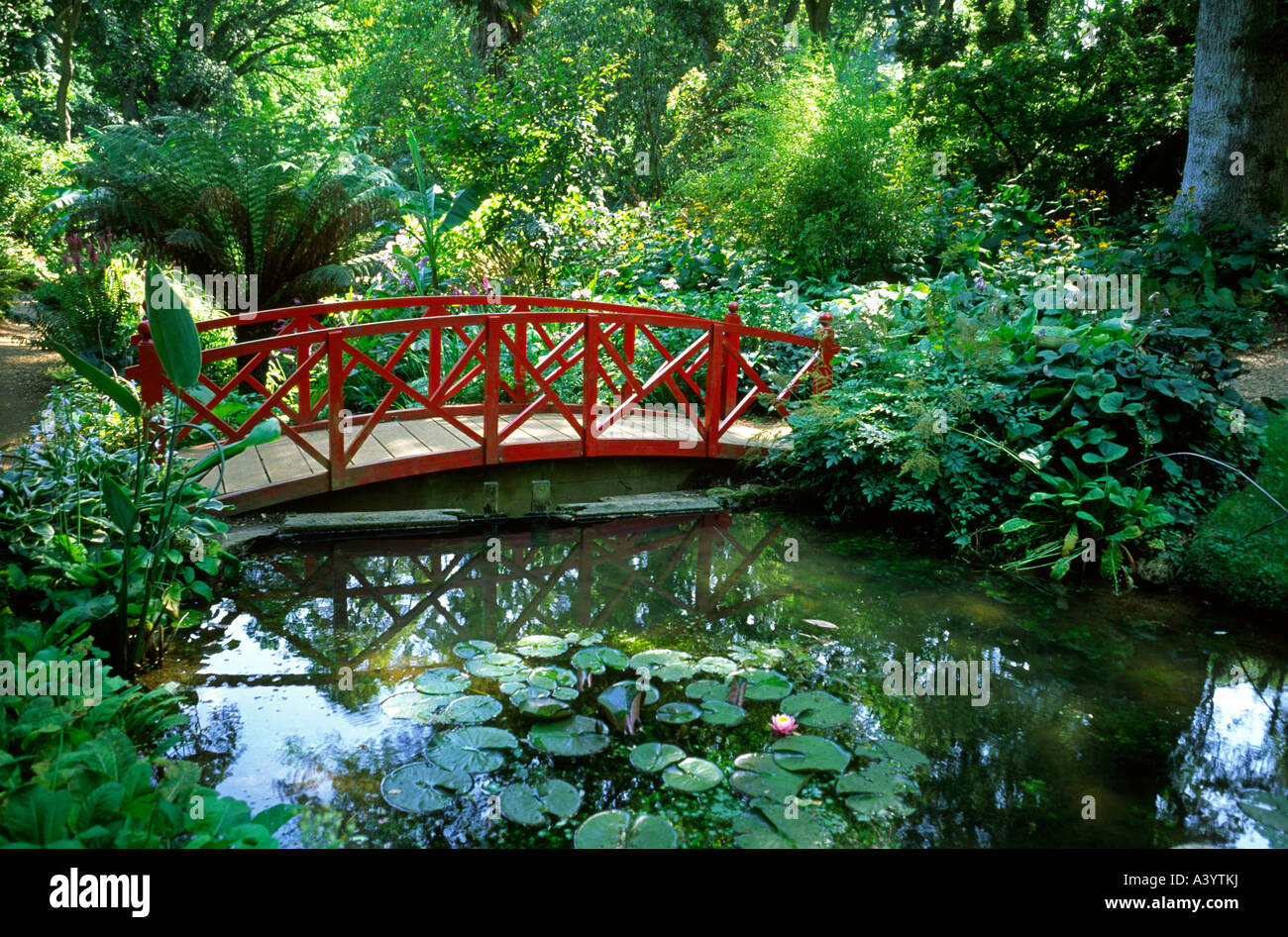 Beauti Garden Pond With Bridge Oriental Style Bridge Over A Lily Pond In Woodland At Abbotsbury Stock Photo