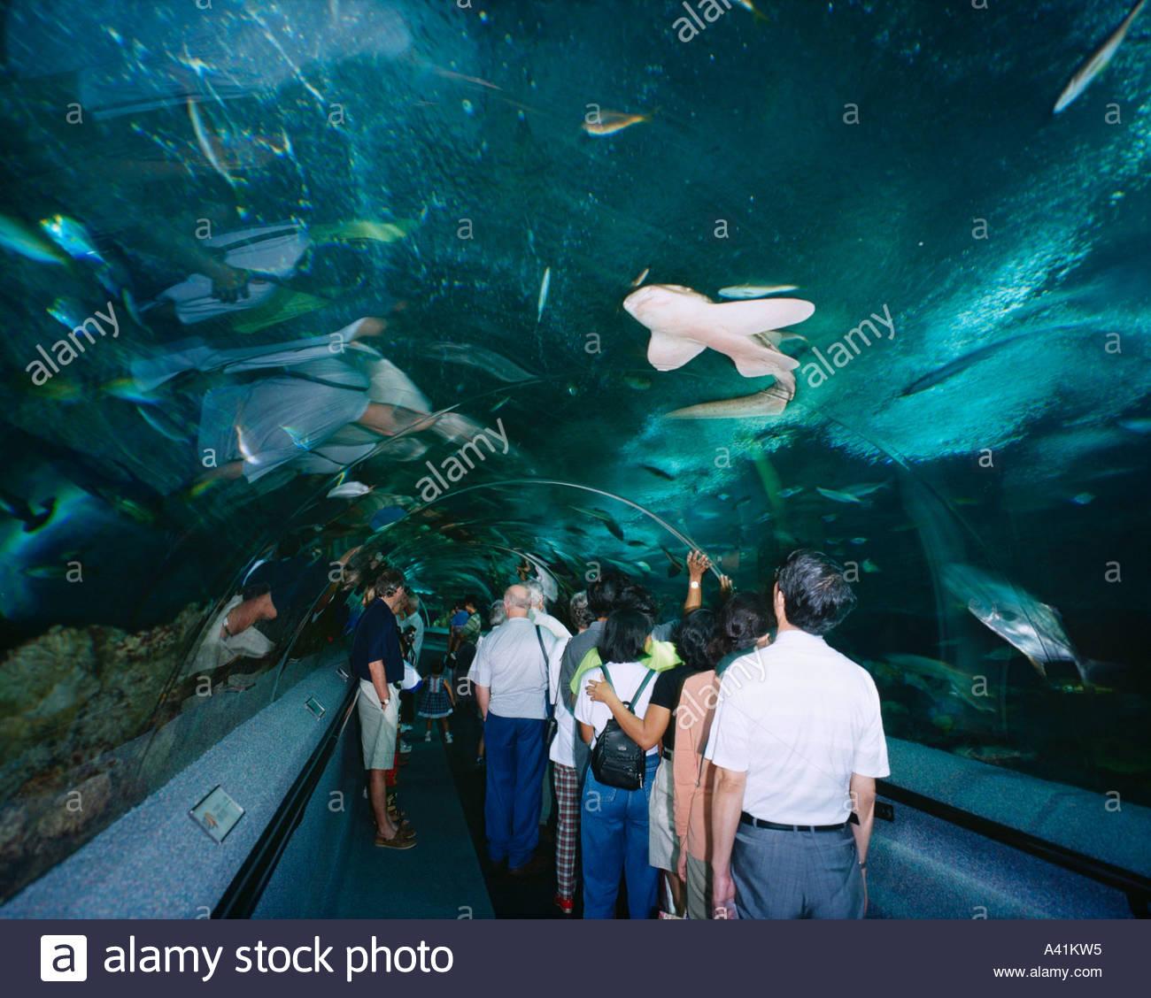 Fish aquarium in sentosa - Stock Photo Underwater World Sentosa Island Singapore Aquarium People Fish Arch