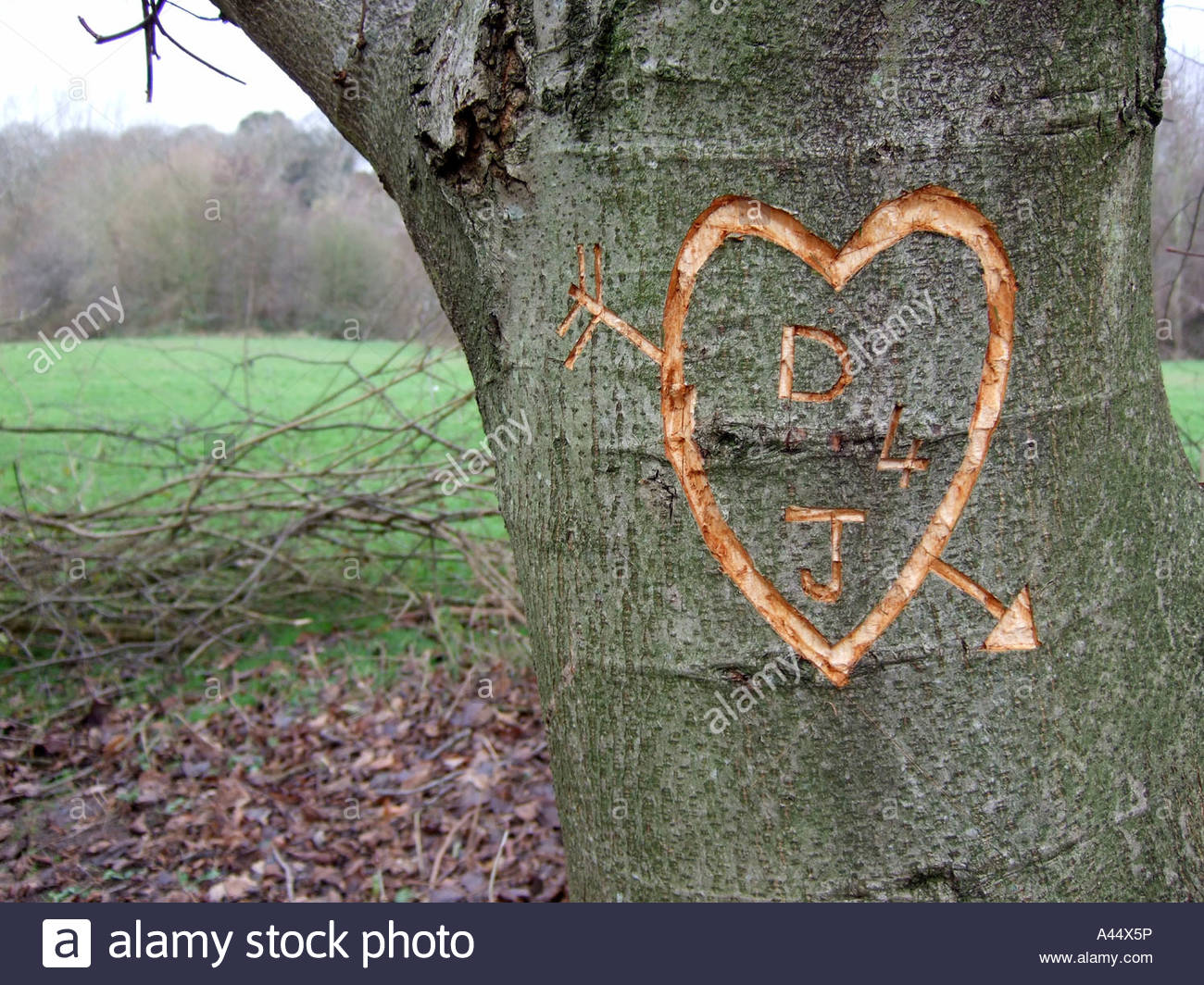 Initials and love heart carved into tree bark uk stock