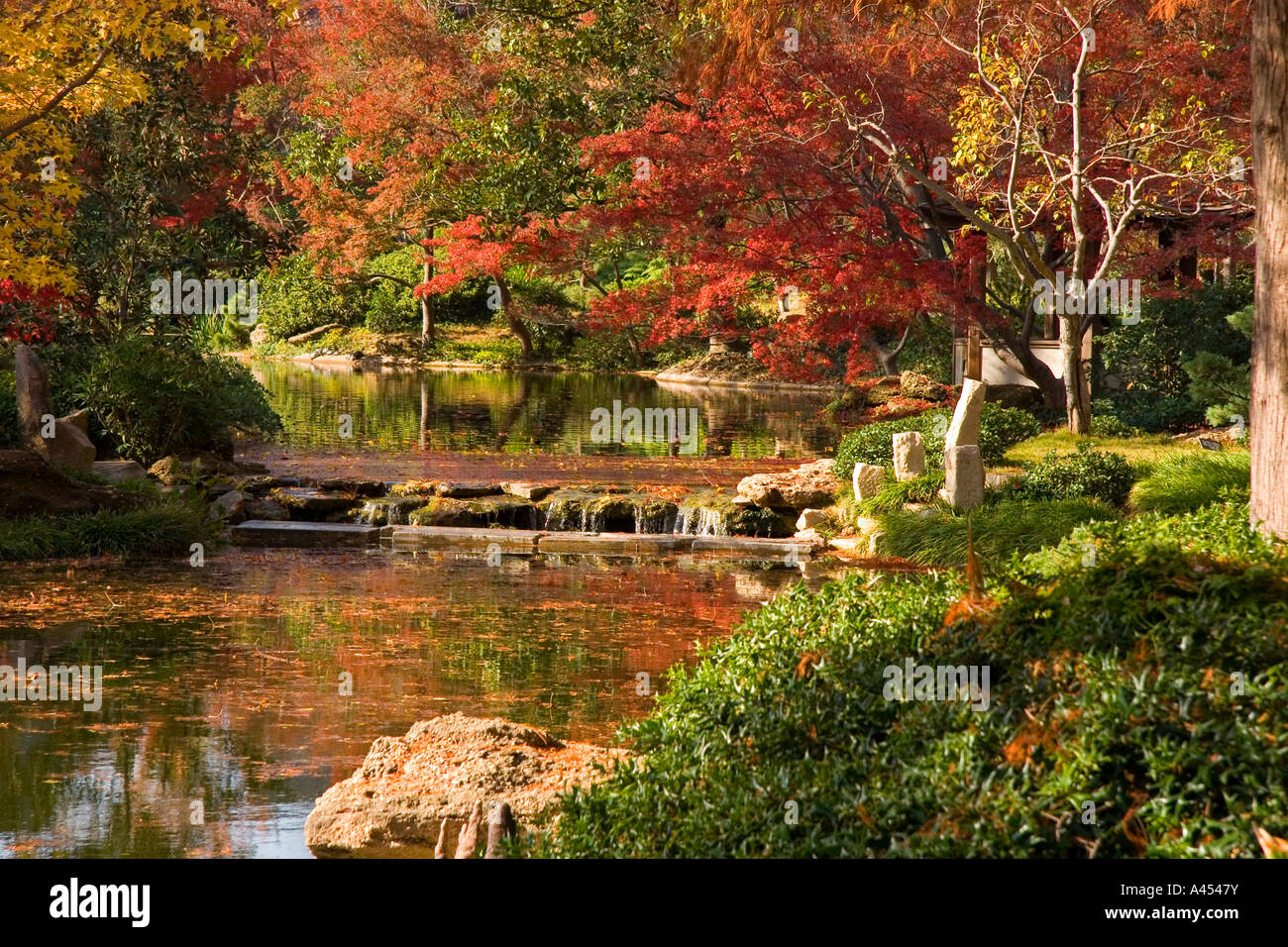 Tranquil Fall Colourful Scene, Waterfalls, Pond, Japanese Botanical Gardens,  Fort Worth, Texas