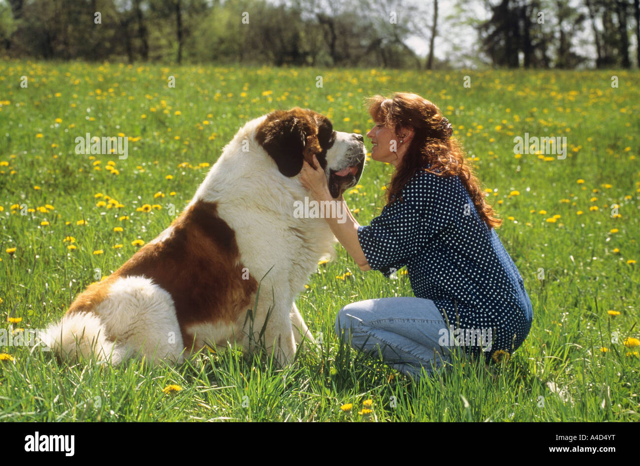 saint bernard asian personals Find saint bernards for sale on oodle classifieds join millions of people using oodle to find puppies for adoption, dog and puppy listings, and other pets adoption don't miss what's happening in your neighborhood.