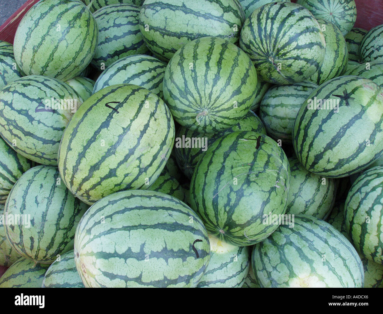 Download Shopping For Melons