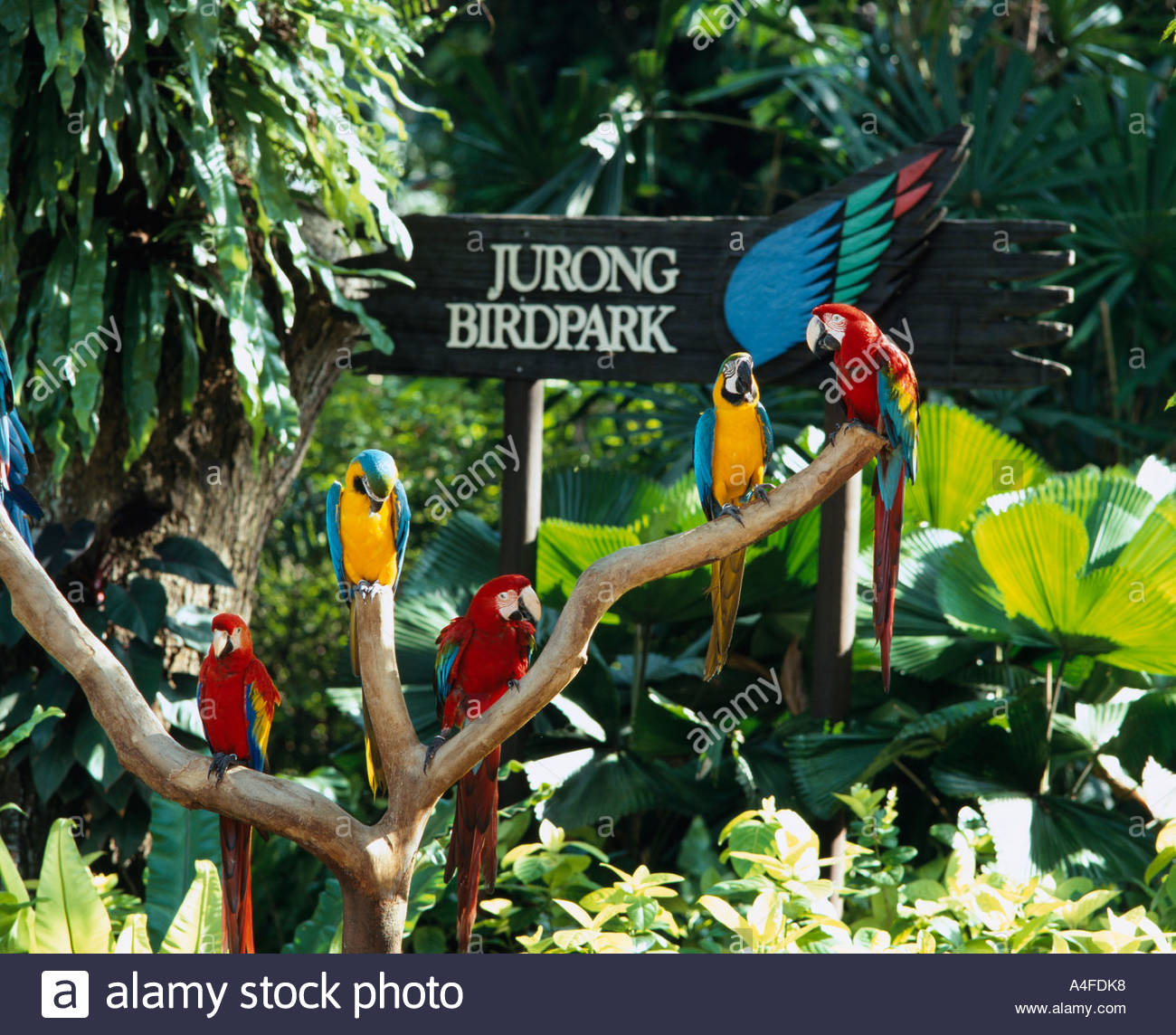 jurong bird park With over 5,000 exotic birds jurong bird park is currently asia's largest bird park the african waterfall aviary houses the tallest man-made waterfall.