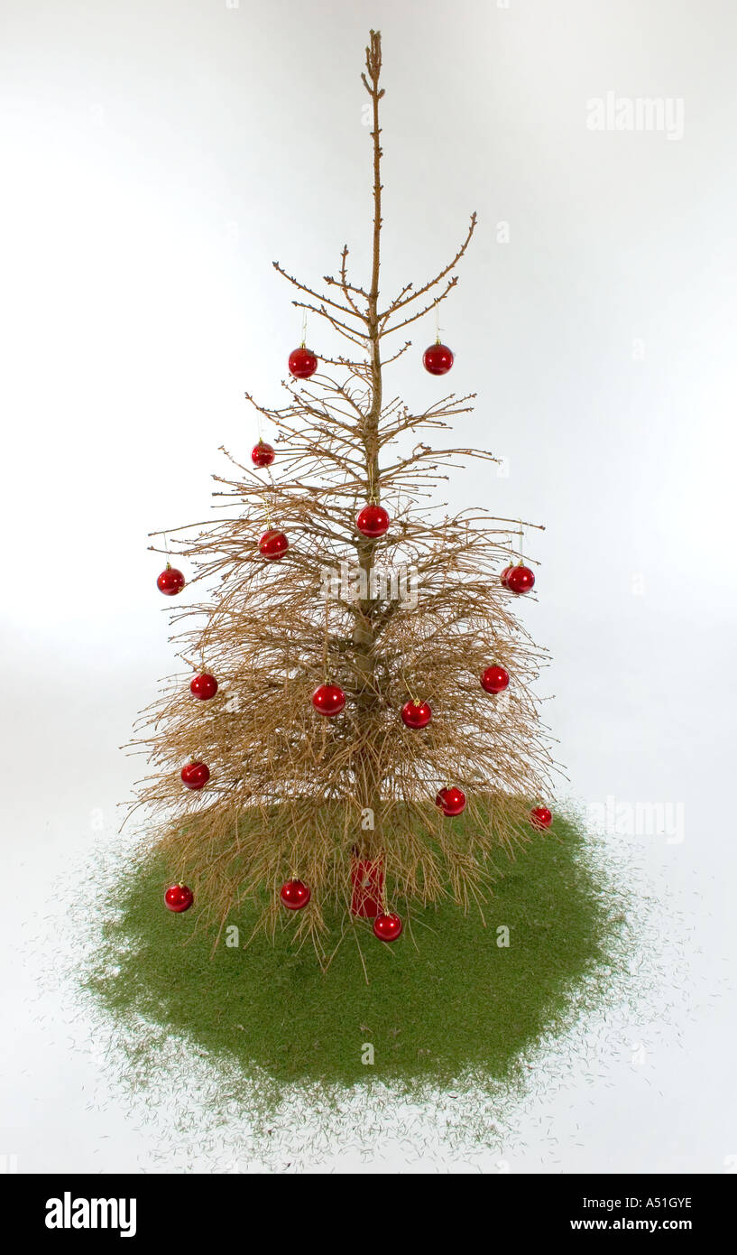 Old Christmas tree with no needles on it Stock Photo, Royalty Free ...
