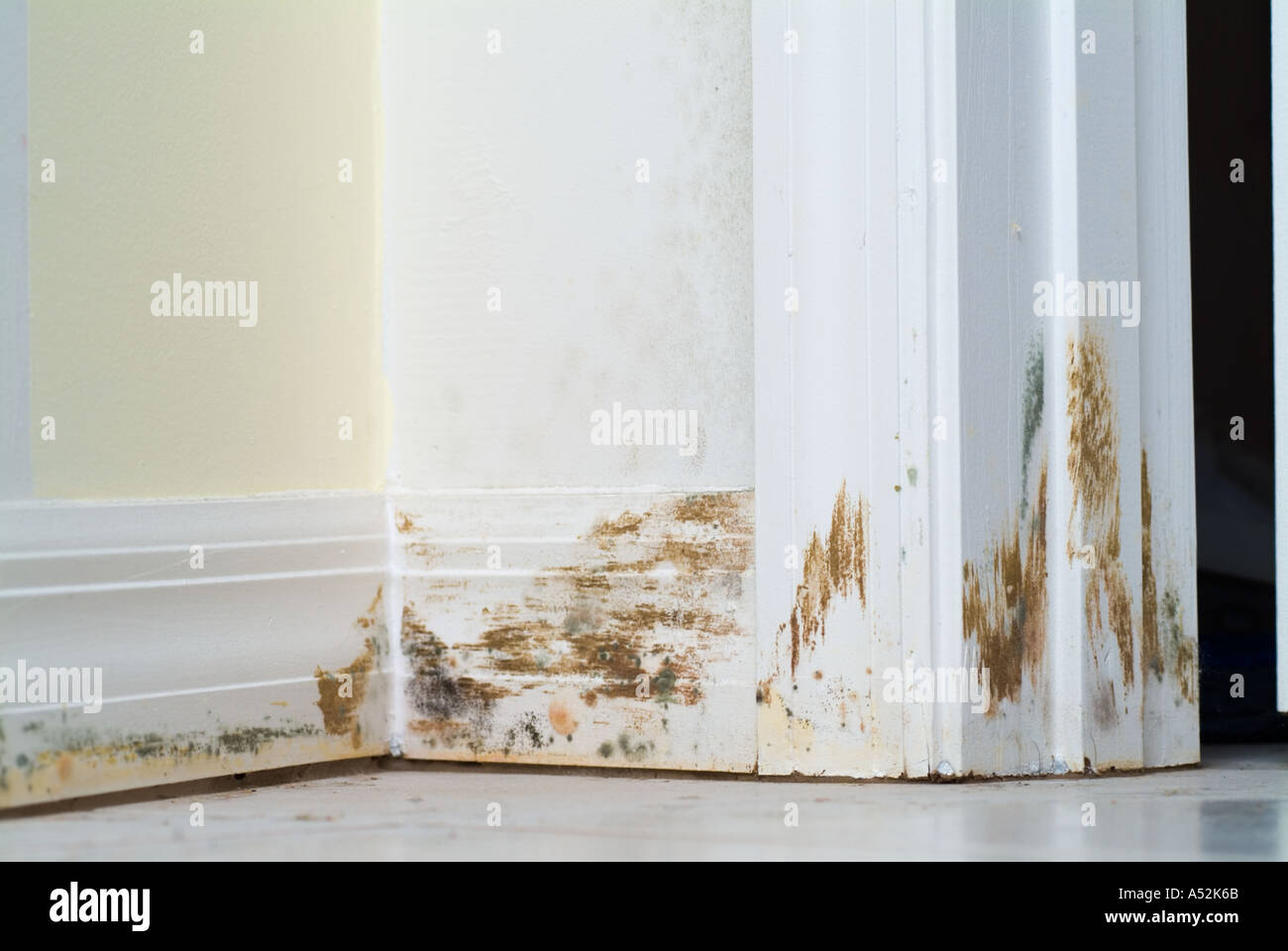 Mold mildew on inside wall along baseboard molding storm damage water stock photo royalty free for Water damage baseboard bathroom