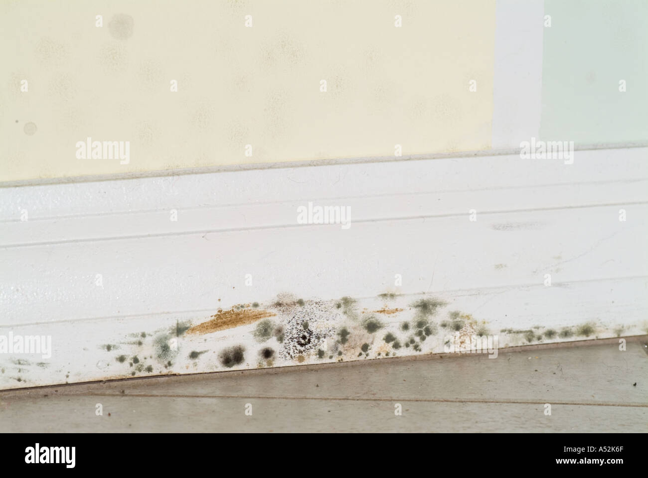 Stock Photo   mold mildew on inside wall along baseboard molding storm  damage water damaged home. Mold Mildew On Inside Wall Along Baseboard Molding Storm Damage