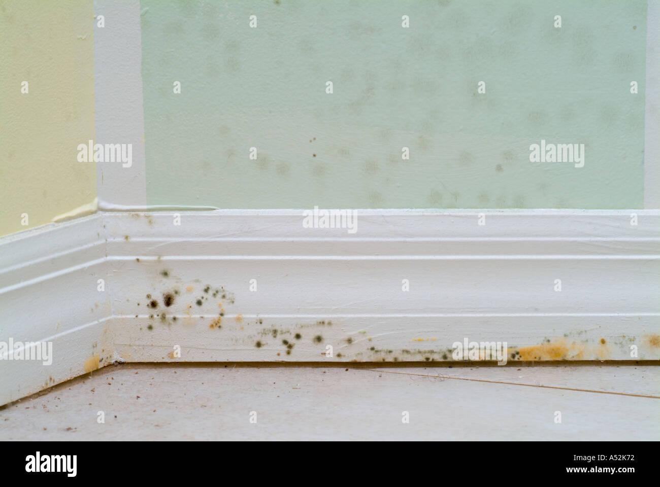 Baseboard Molding White Wood Grain 4x12 Baseboard Trim Molding Polished Poplar Casing And